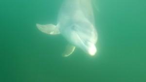 Dolphin Selfi