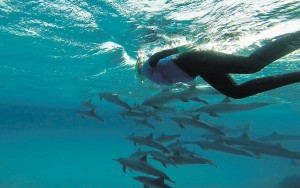 Snorkeling with wild dolphins