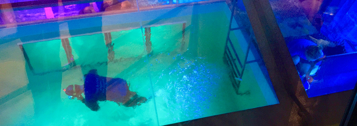 The dolphins had people swimming in tanks again, thanks to the Rabobank